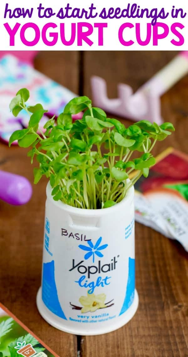 How to Start Seedlings in Yogurt Cups
