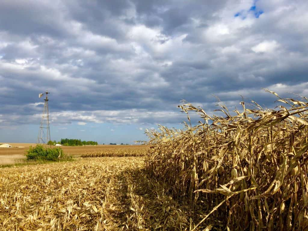 A photo of a corn field with half of the field cut