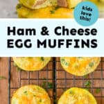 collage of photos of ham and cheese egg muffins